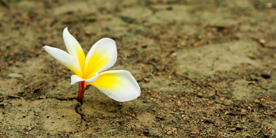 Цветок, растущий из сухой земли