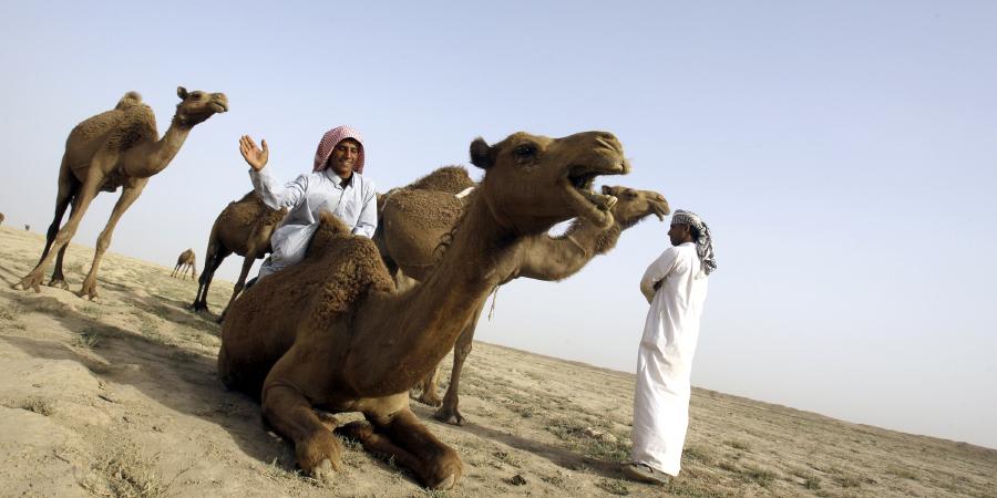 5 хадисов о бережном отношении к животным