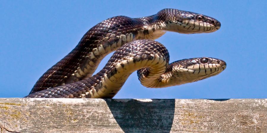 Две змеи на крыше