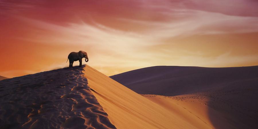 Сура «Аль-Филь» («Слоны»)