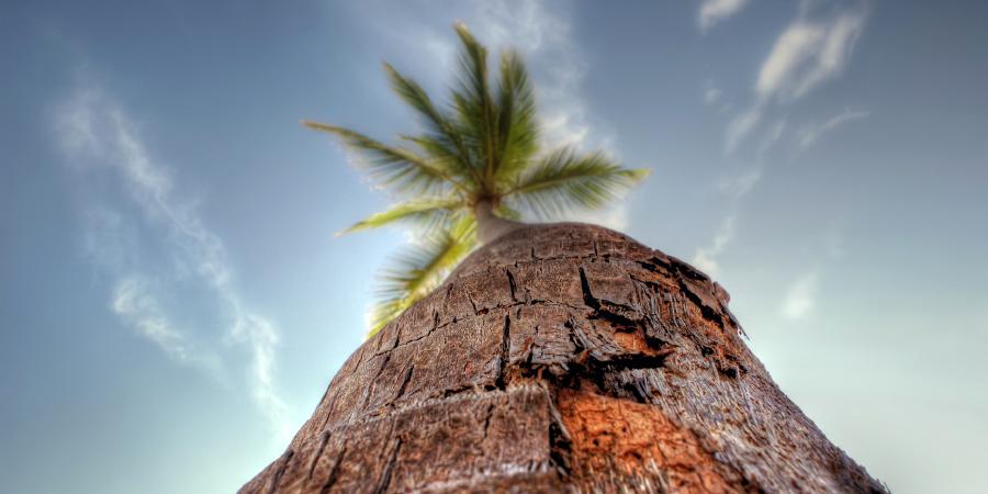 Сура «Аль-Масад» («Пальмовые волокна»)