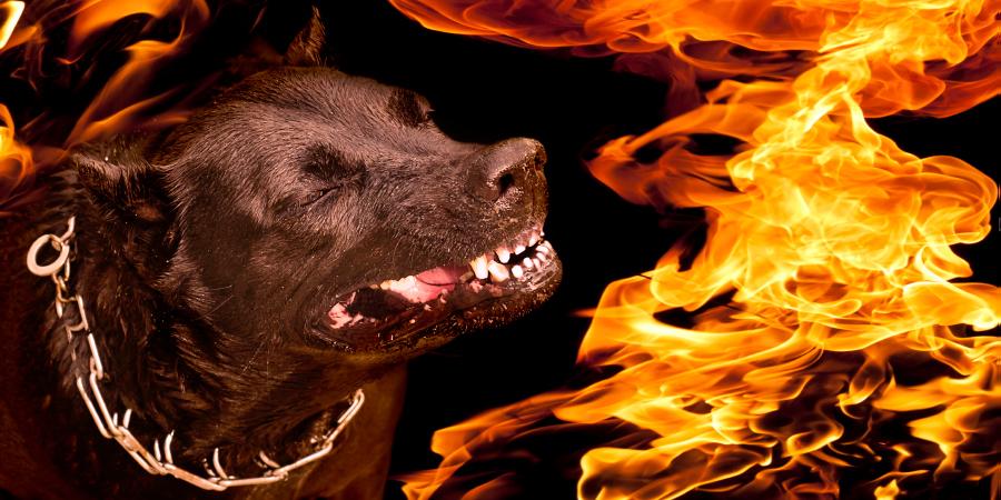 Чёрная собака в ошейнике, объятая пламенем