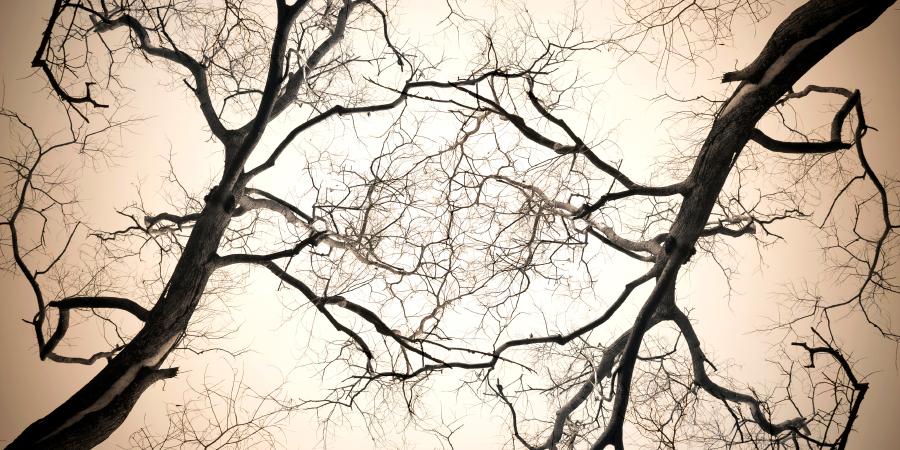 Переплетённые ветви мёртвого дерева