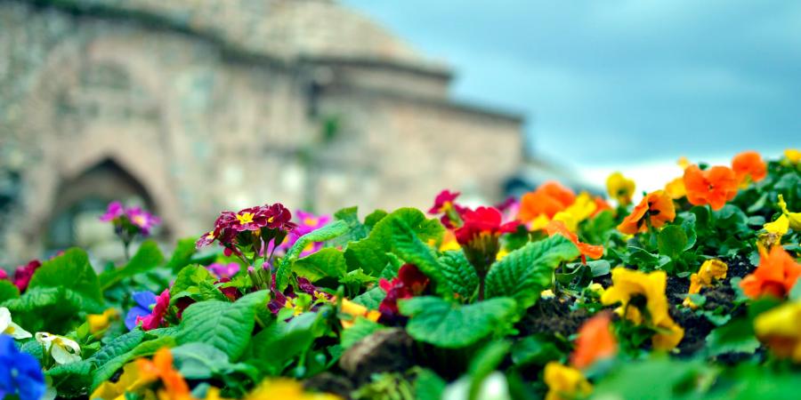 Цветы на фоне мечети Улу Джами, Бурса, Турция