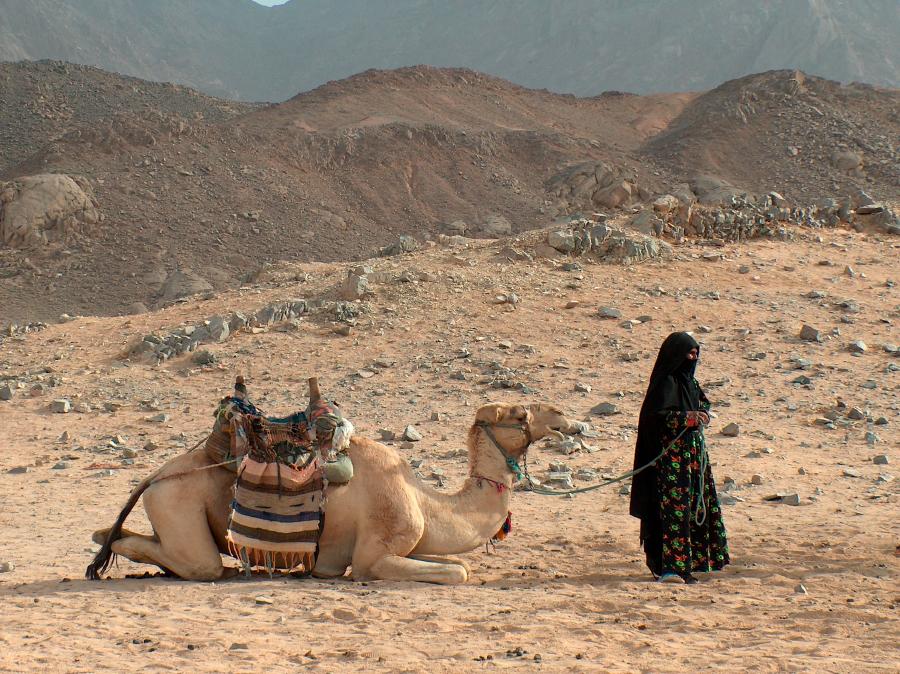 Чернокожая бедуинка и верблюд
