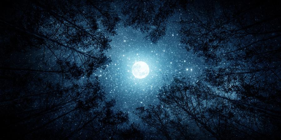 Луна и звёзды над верхушками деревьев